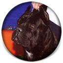 About Time's .357 Magnum, Black Brindle Cane Corso Male Puppy