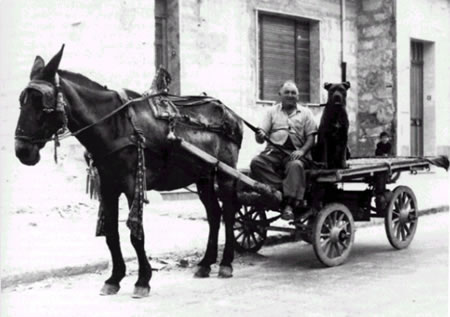 "Cane Corso, 1960, Sicilia - Italy. ""Vittoria ( RG), 1960: Don Turidda Lillo with his corso Furiusu, his mule, and his cart"""