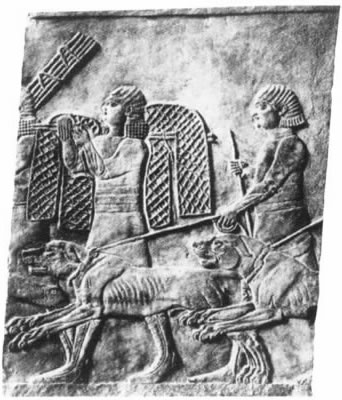 Wall Relief of Assyrian Mastiffs and handlers with hunting nets (approx 1200 B.C.)