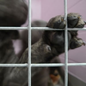 PetStore & PuppyMill dogs live their lives behind bars.